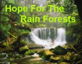 Coach Pantas' Rain Forest Website